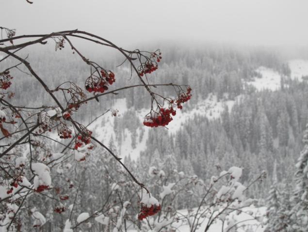 Ski safari en Alta Pusteria. Remar con gusto