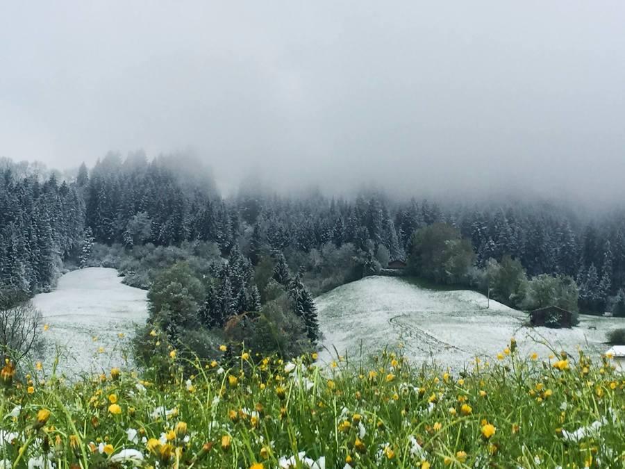 Life in White Primavera
