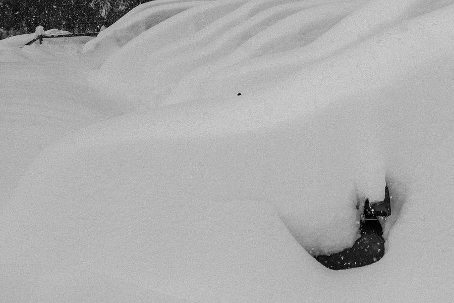 Life in White nevada
