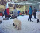 Una pista de esquí cubierta abre gratis para los perros en verano