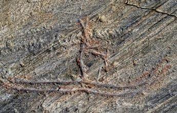 Se cargan el petroglifo esquiador de 5.000 años