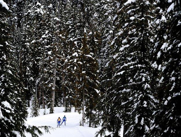 Fotografía de participantes de esquí de fondo en una pista entre pinos