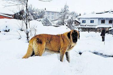 San Isidro inaugura la campaña de esquí el próximo sábado