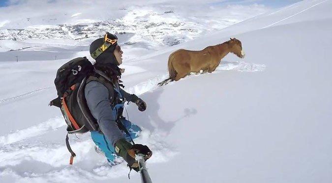 Encontraron un caballo atascado en mitad de El Colorado