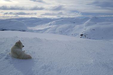 Mi nuevo amigo salvaje y el valle más mágico de Noruega.