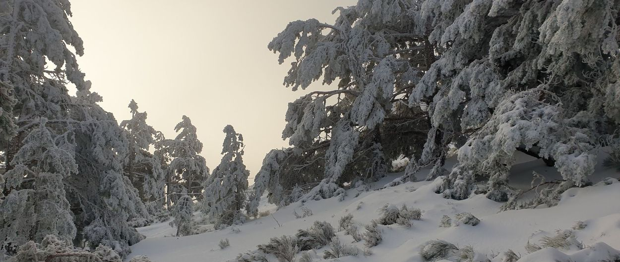 Bosque de Navafría: estrenando la temporada en el central, que ya tocaba