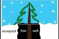 Si esquías powder, cuidado con los tree wells