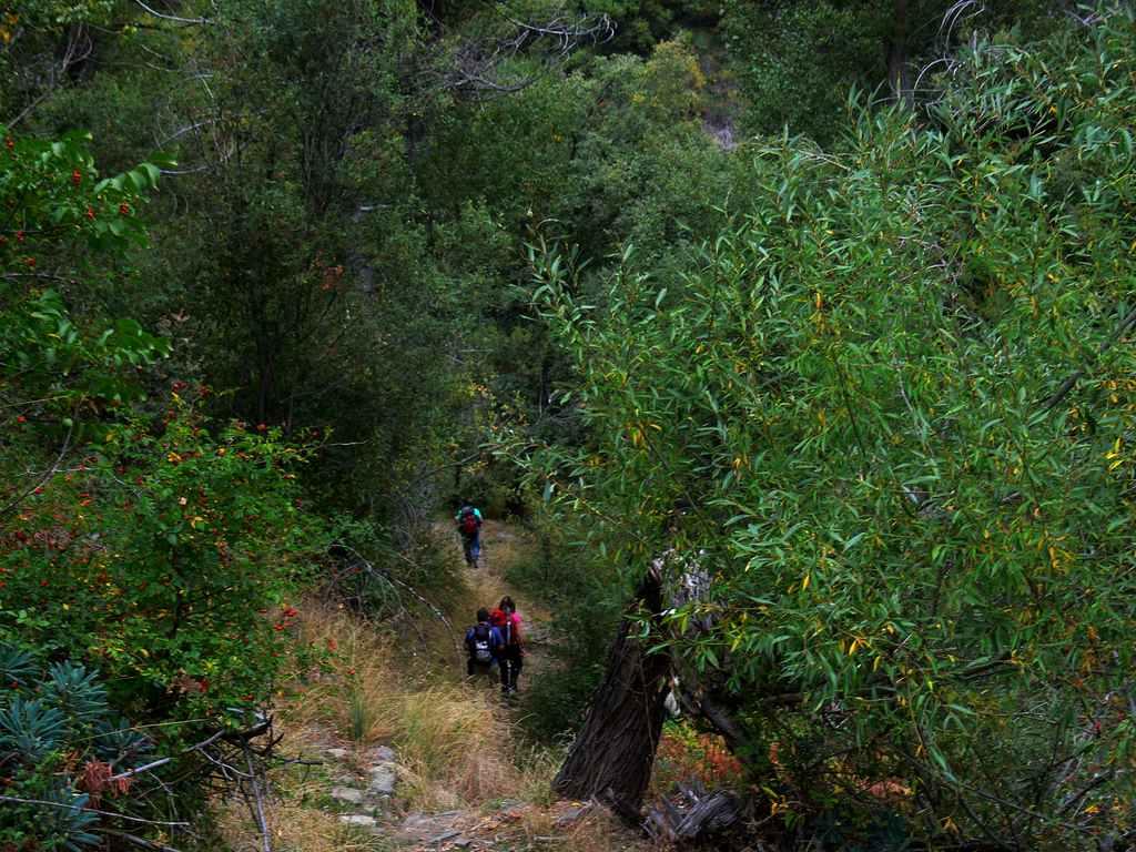 Valle del poqueira rio toril - Altos del toril ...