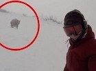 Bajaba en Snowboard y la persiguió un oso  ¿fake o real?