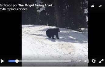 Un oso se pasea junto a los esquiadores en Whistler
