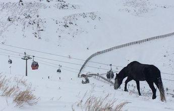 Movilización social para rescatar un caballo abandonado en Sierra nevada
