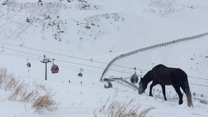 [Imagen: 697403-Movilizacion-social-para-rescatar...nevada.jpg]