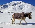 El caótico esquí en Marruecos