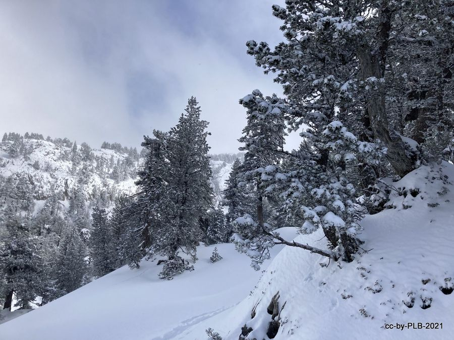 En Belagua con nieve nueva [20-mar]