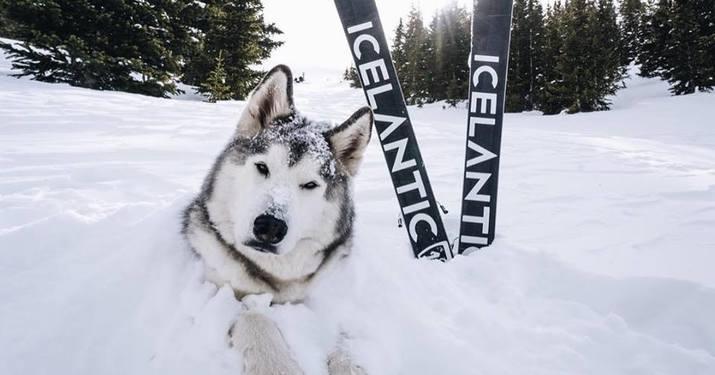 Colección Icelantic 2018/2019