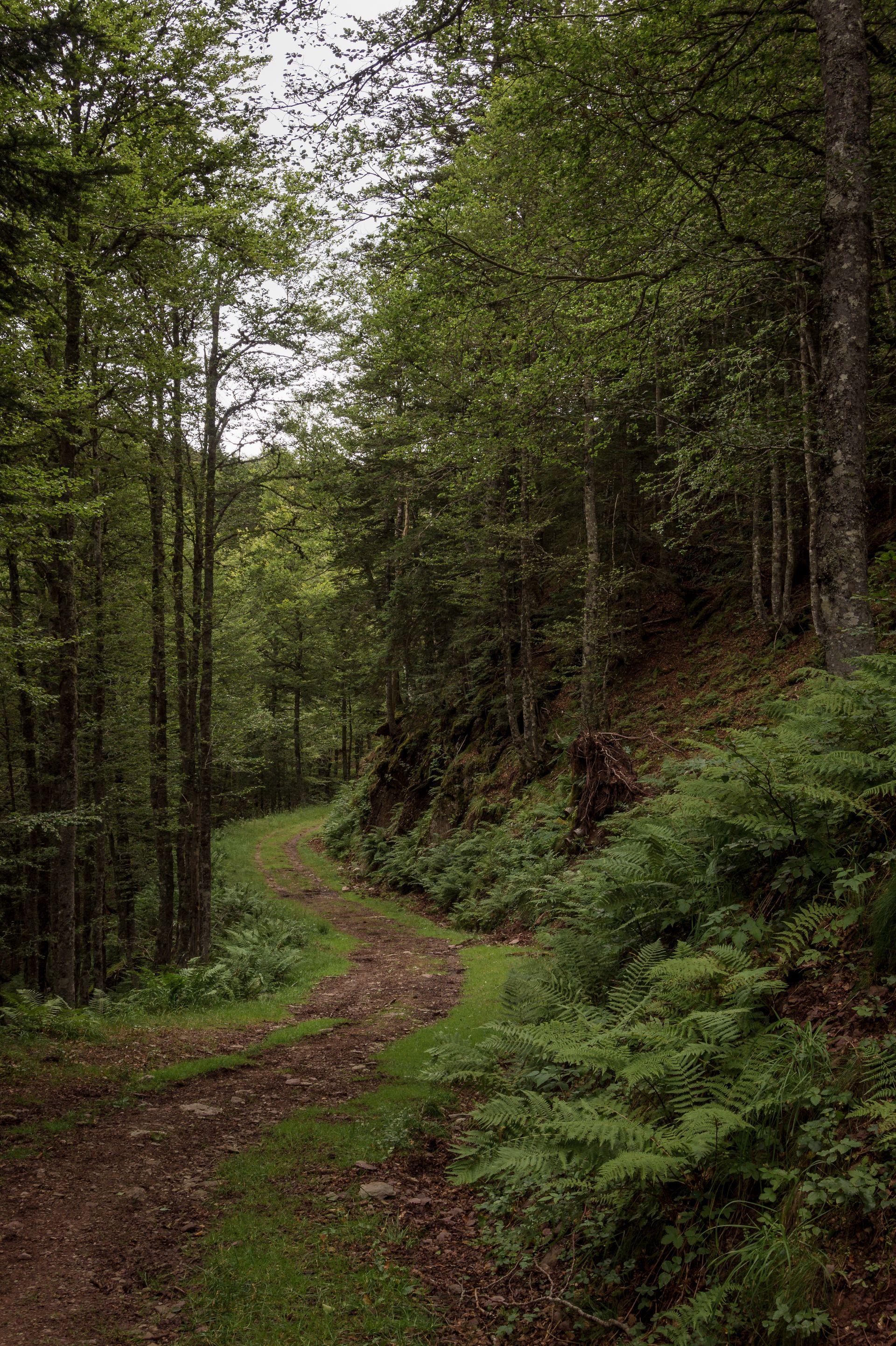 Bosques de Somport