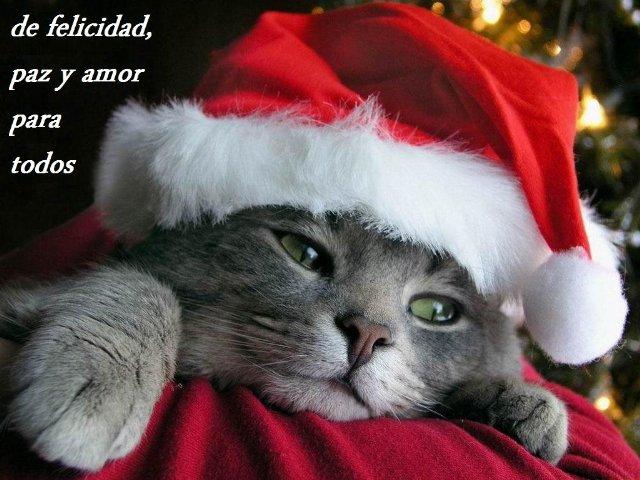 Fotografía de un gato adormilado con un gorro de Papa Noel y con el escrito, de felicidad paz y amor para todos