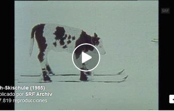 El día que un suizo enseñó a esquiar a sus vacas