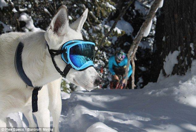 gafas de agua para perros