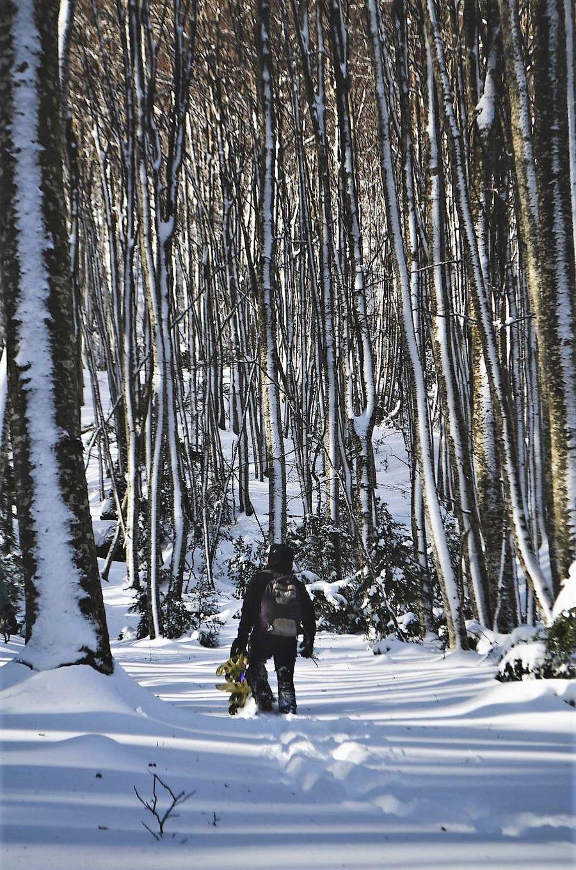 Ricardo Montoro - bosques