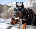 Máscaras de esquí para perros