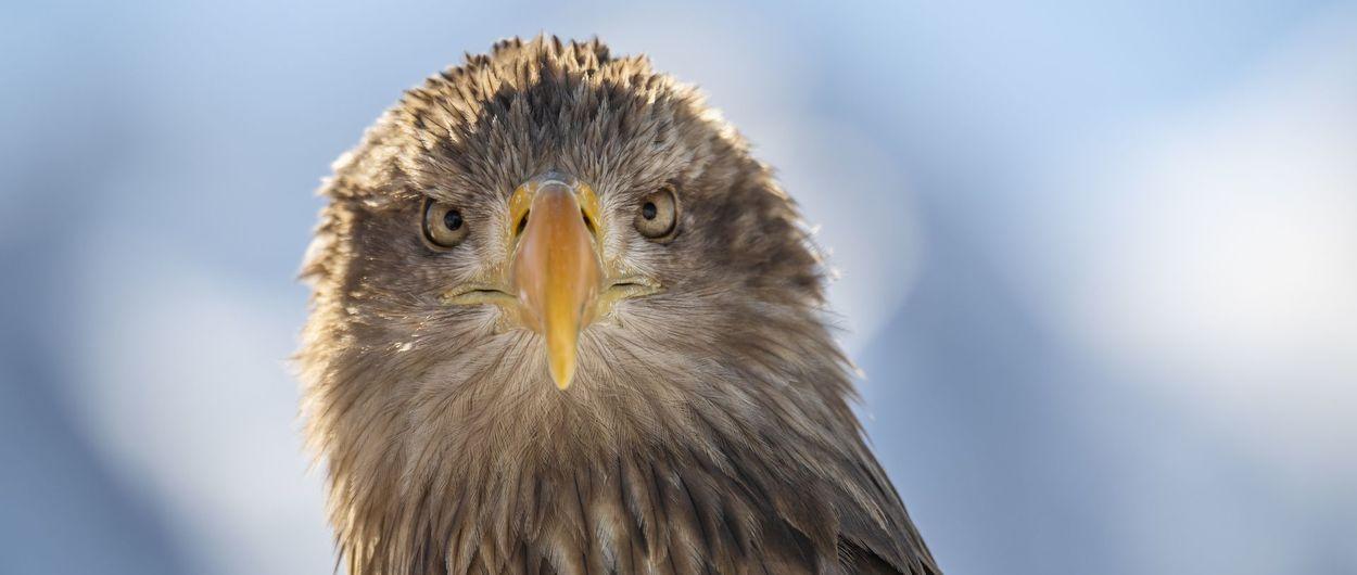 Las águilas de Leman