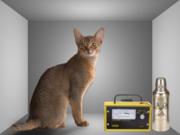 el gato de schrodinger