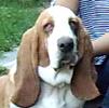 Doverdog
