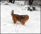 Esquiando con lobos