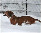 La gran nevada del 11 de febrero de 2009